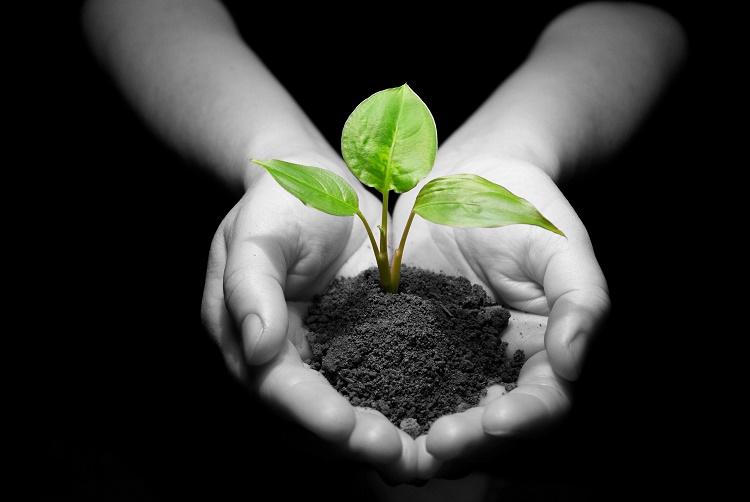 روز درختکاری+قصه صوتی کودکانه