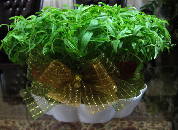 سبزه کودکانه برای نوروز