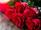آرزوی گل سرخ + قصه کودک